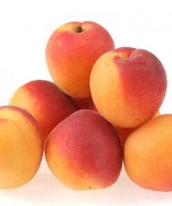 apricot honeyberry