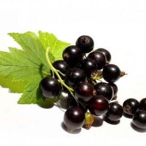 Blackcurrant Flavour Natural extract supplier honeyberry international