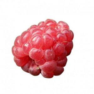 Honeyberry International Raspberry Flavour Natural Ingredients